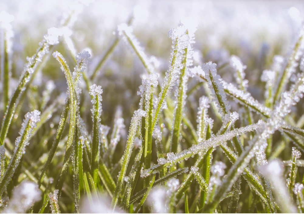 winter lawn checklist for High Country