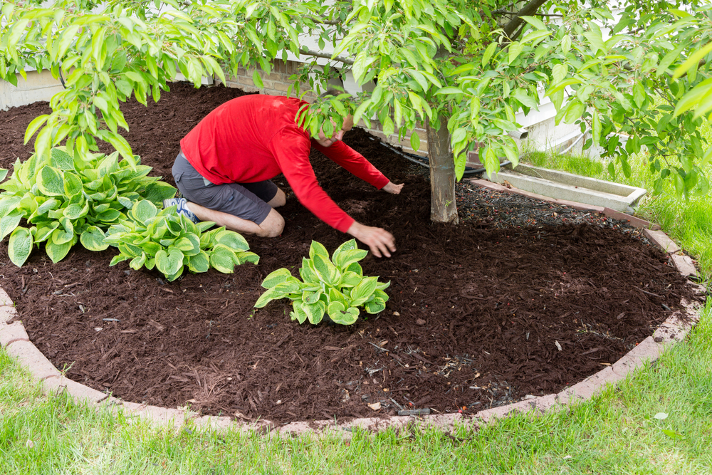 protecting yard plants and trees by adding mulch